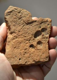 A Roman terracotta roof tile fragment from the River Thames, London, featuring a dogs paw print impression. SOLD